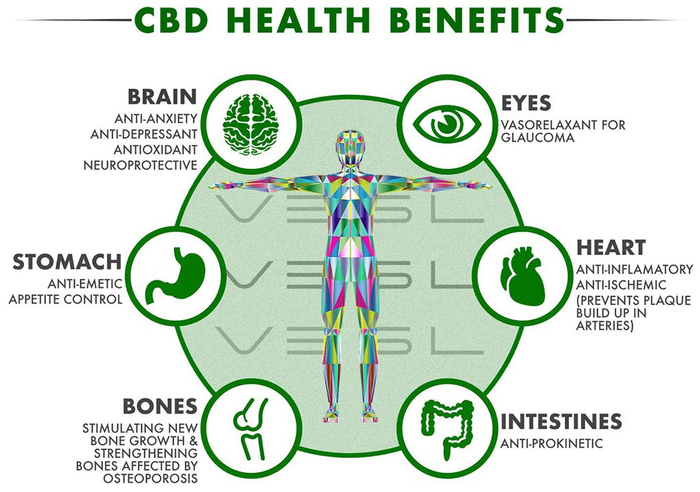 effects of the cbd